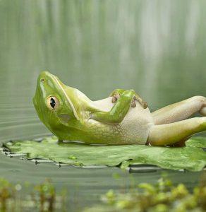 kikker meditatie